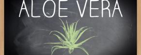 Mês Cultilógico: o Aloe Vera