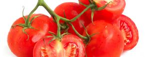 Promoção Cultivo Biológico: Tomates Cereja