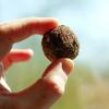 """""""Seed Bomb"""" ou bombas de semente"""