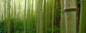 Bambu, um grande elemento decorativo