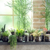 Suculenta, a planta do mês de junho