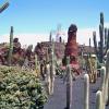 O Jardim Botânico de Cactus em Lanzarote