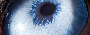 Já reparou bem nos olhos dos animais?