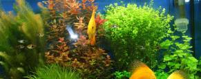 Como escolher plantas para o aquário?