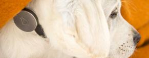 Uma coleira para medir a saúde do seu cão