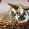 Como segurar correctamente num coelho