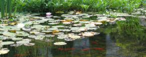 Escolha o lugar ideal para criar o seu lago