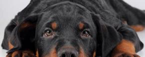 Como saber se o seu cão está doente