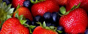 Frutosos: os frutos do bosque