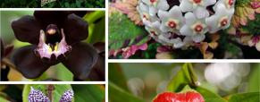 O melhor de 2013: Plantas Incríveis
