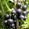 Frutos do Bosque