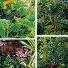 Plantas verdes com folhas muito originais