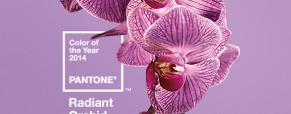 A cor Pantone do Ano é a Orquídea Radiante