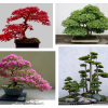 O Bonsai, uma planta de inverno