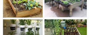 Crie a sua própria horta em casa