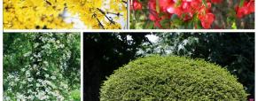 Cuidar de arbustos