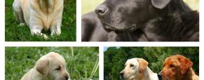 Os Labradores