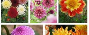 Plante bulbos na primavera