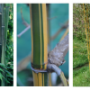 O Bambu