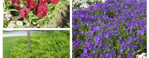Plantas para cobrir o solo
