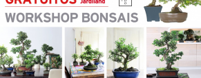 Workshop: Bonsais