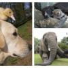 Amizades de animais insólitas