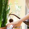 Prepare as plantas para as suas férias