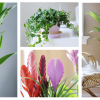 As plantas de interior mais resistentes