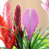 Plantas vigorosas e atrativas em sua casa