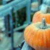 Faltam 7 dias para o Halloween!