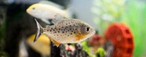 Aquariofilia, a paixão pelos aquários