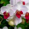 Curiosidades sobre orquídeas