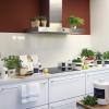 5 Plantas para decorar a sua cozinha