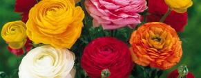 Conheça as flores de inverno