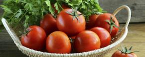 Fevereiro: o mês para plantar as suas culturas