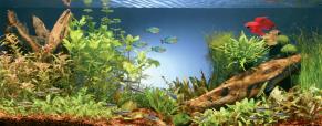 Conselhos para decorar o seu aquário