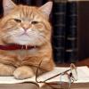 Conselhos para cuidar de um gato esterilizado