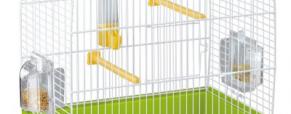 Como limpar a gaiola de roedores e aves
