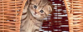 Dicas úteis sobre a caixa de areia do seu gato