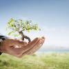 Plante uma árvore: hoje é o Dia Mundial do Meio Ambiente