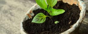 Porque é importante que as plantas tenham um bom substrato?