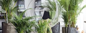 Prepare as suas plantas de interior