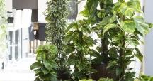 Purifique o seu lar com plantas