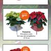Decore o seu lar com plantas de Natal a preços incríveis!