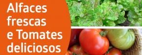 Alfaces frescas e tomates deliciosos!