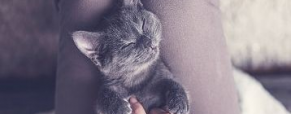 Nada de stress para o meu gato!
