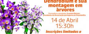 Workshop gratuito: Orquídea Dendrobium e a sua montagem em árvores