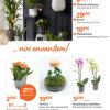 Plantas de interior… nos encantam!