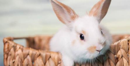 Prepare o habitat para o seu coelho