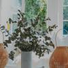 6 Conselhos Déco para criar o lar ideal